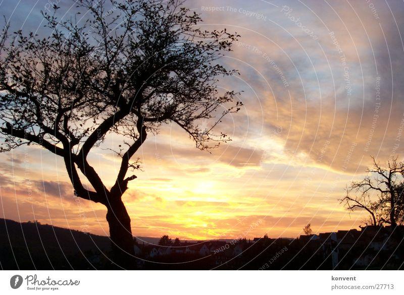 Baum vor Sonnenuntergang Natur Herbst Stimmung