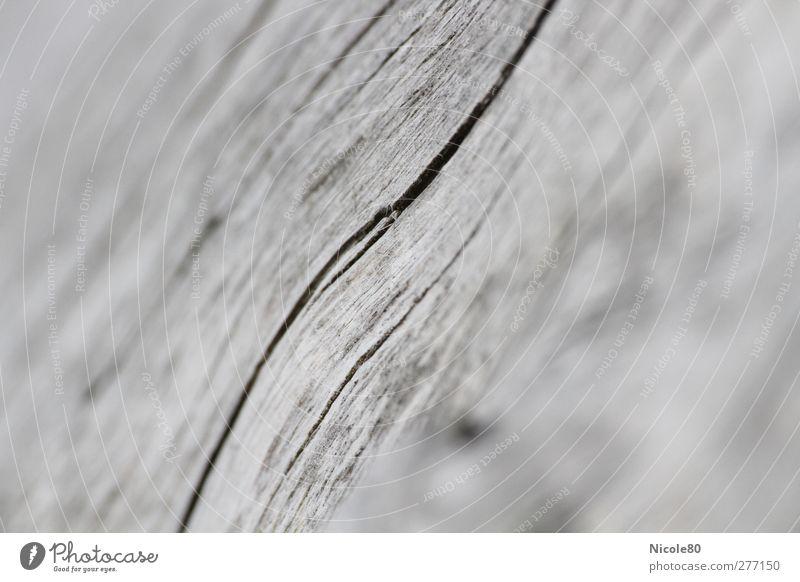 Lebenslinien Natur Holz grau Hintergrundbild Textfreiraum Riss Maserung Grauwert Totholz Holzfaser