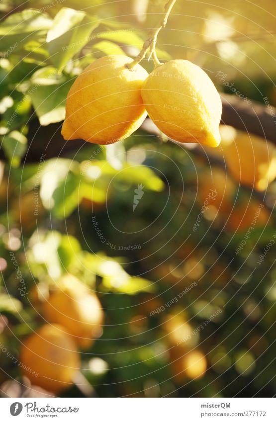 Orange Garden XIII gelb Kunst ästhetisch Vitamin Zitrone Plantage züchten Zitrusfrüchte anbauen Vitamin C Arbeit & Erwerbstätigkeit abstrakt Frucht zitronengelb