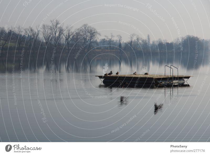 Fliegende stille Natur Wasser Winter Ferne See Vogel Zufriedenheit Wildtier Tiergruppe