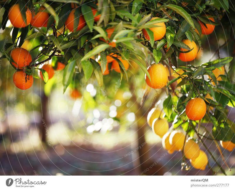 Orange Garden XIV Baum Blatt Gesundheit orange Frucht Orange ästhetisch viele reif ökologisch mediterran Vegetarische Ernährung Südfrüchte Vitamin C Orangenbaum Orangenhain