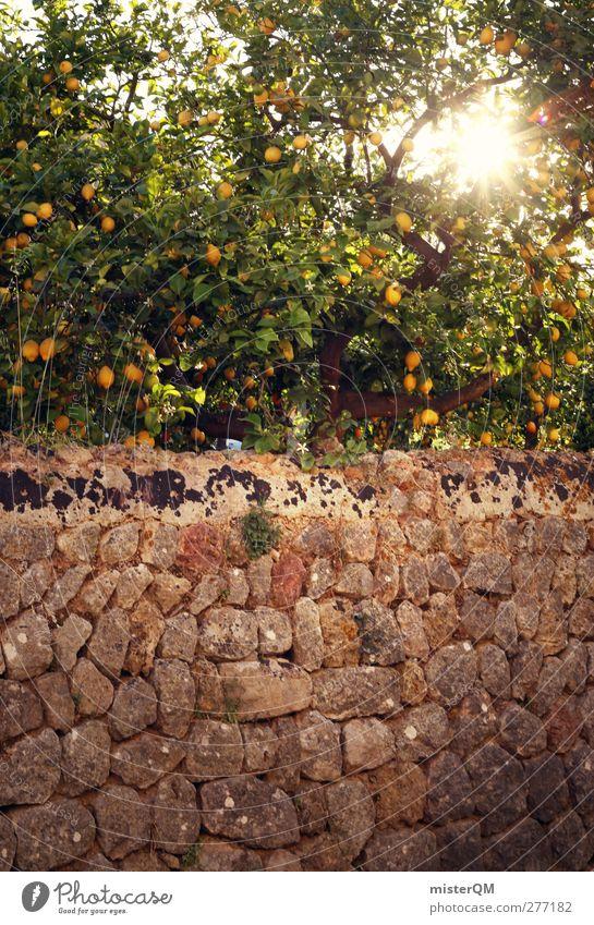Orange Garden XV Natur Pflanze Landschaft Umwelt Mauer Idylle ästhetisch Spanien mediterran Sommerurlaub Mallorca reif abgelegen paradiesisch Zitrone friedlich