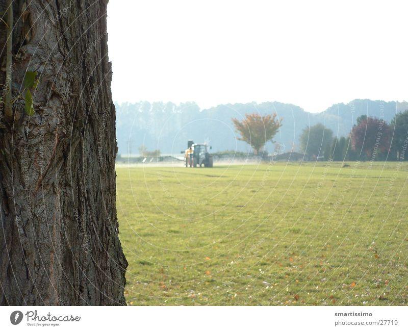 Wachs Traktor Feld Wiese Baumrinde grün