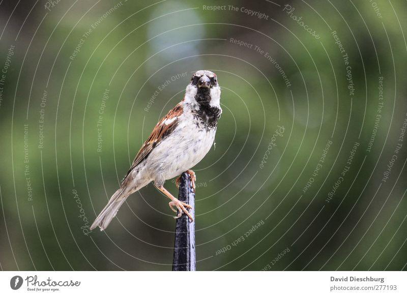 Blickkontakt Natur Tier Wildtier Vogel Tiergesicht Flügel 1 grün Spatz Neugier Feder Spitze Singvögel Farbfoto Außenaufnahme Tag Unschärfe Tierporträt
