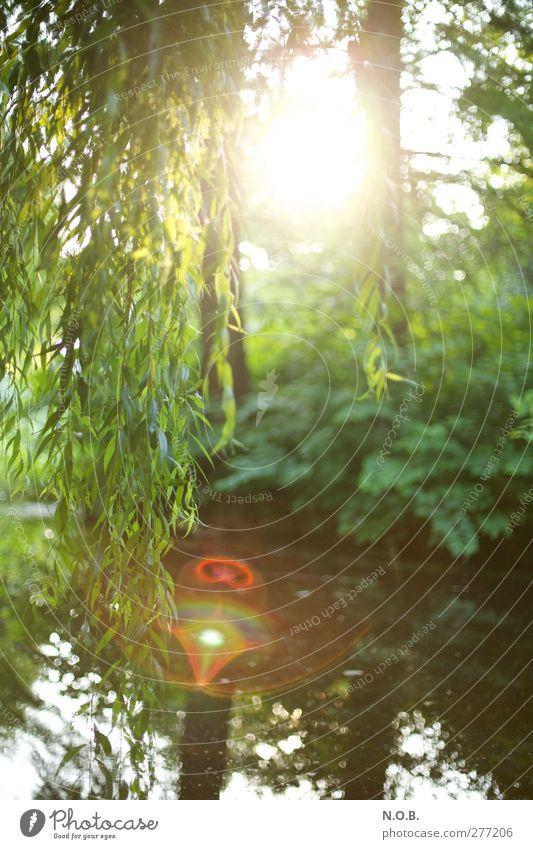 Weidenspiel Natur Wasser grün Sommer Baum Pflanze rot Sonne ruhig Landschaft Umwelt See Park natürlich ästhetisch Schönes Wetter