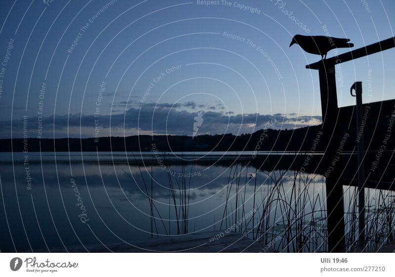 Nachtwache.................... Himmel Natur blau Wasser Sommer Einsamkeit Tier ruhig schwarz Landschaft dunkel grau See träumen Vogel Horizont