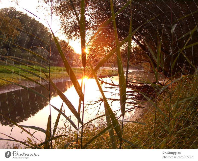 Altrheinsonne Altwasser Sonnenuntergang Wörth am Rhein Rheinauen Rheinland-Pfalz Wasser Goldgrund Maximiliansau Hitzewelle Trockenzeit