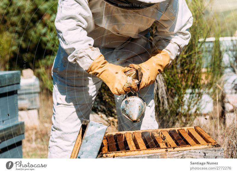 Imker, die arbeiten, sammeln Honig. Biene Wabe Imkerei Bienenkorb Bienenstock Bauernhof Rauch Rauchen Natur Honigbiene Mann Bienenwachs abholen Landwirtschaft