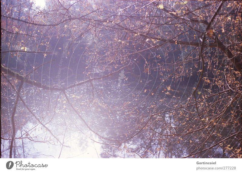 Waldsee Umwelt Natur Herbst Baum See hell herbstlich Zweige u. Äste Farbfoto Außenaufnahme Licht Reflexion & Spiegelung Sonnenlicht