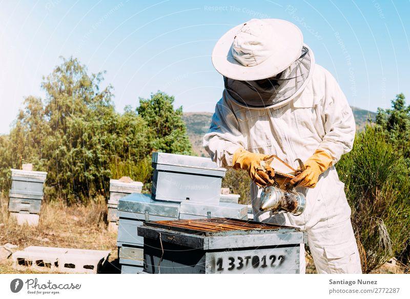 Imker, die arbeiten, sammeln Honig. Biene Wabe Imkerei Bienenkorb Bienenstock Bauernhof Natur Honigbiene Mann Bienenwachs abholen Landwirtschaft hausgemacht