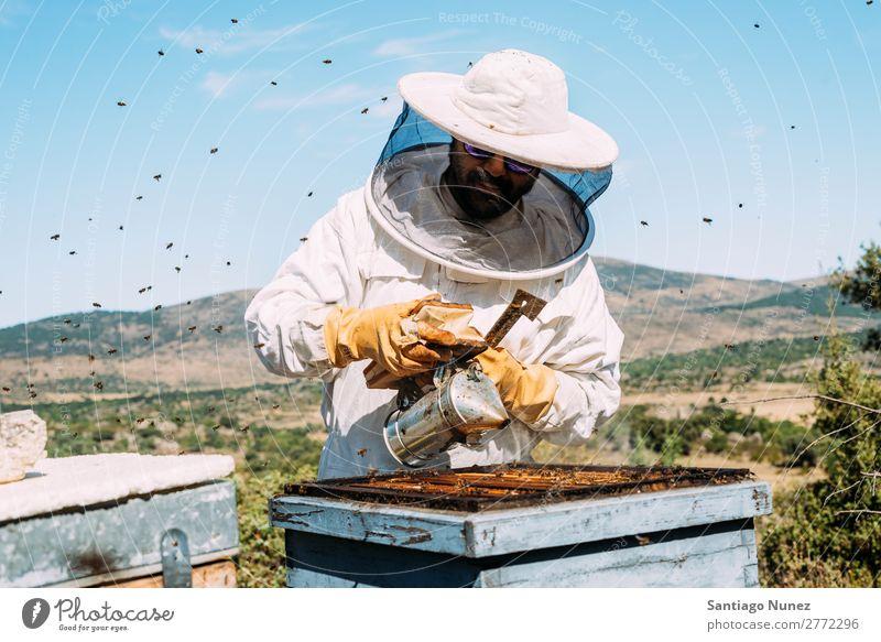 Imker, die arbeiten, sammeln Honig. Biene Wabe Imkerei Bienenkorb Bienenstock Bauernhof Natur Honigbiene Zarge Mann Bienenwachs abholen Landwirtschaft