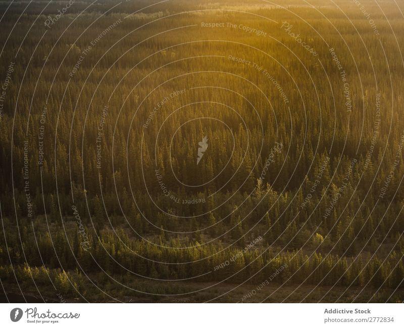 Nebliger grüner Wald Nebel Natur Baum Landschaft Morgen Licht spukhaft natürlich geheimnisvoll Umwelt Park Mysterium Berge u. Gebirge Pflanze Wildnis ländlich