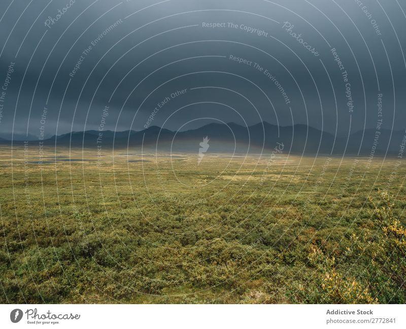 Grüne Prärie in den Bergen Berge u. Gebirge Gelände Grasland Natur Landschaft Erholung natürlich Wildnis Düne Wege & Pfade abgelegen ruhig Wald Abenteuer Tal