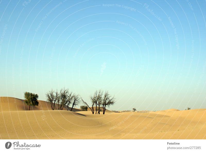 Die Wüste lebt Umwelt Natur Landschaft Pflanze Urelemente Erde Sand Himmel Wolkenloser Himmel Baum Sträucher Wildpflanze Oase heiß hell natürlich Wärme blau
