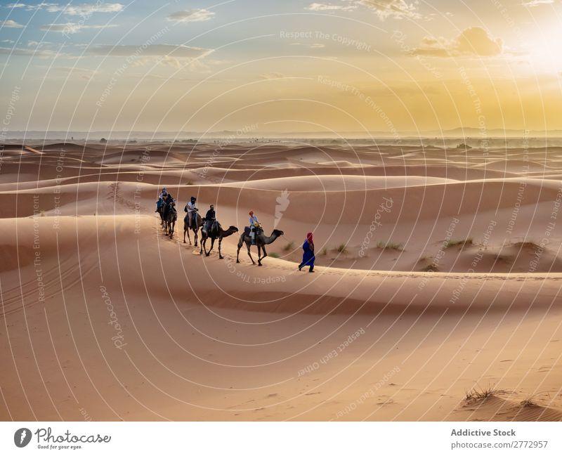 Karawanenwanderung in der Wüste Karavane Kamel laufen Mensch Ferien & Urlaub & Reisen Tourismus Natur Afrika Ausflug Afrikanisch Sand Tier Silhouette Sonne