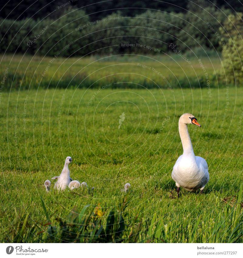 Ich will auch aufs Foto!!! Natur weiß grün Pflanze Tier Wald Landschaft Umwelt Wiese Frühling Tierjunges Garten Vogel Park Feld Wildtier
