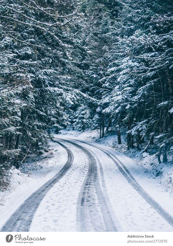 Verschneite Straße im Wald Schnee Landschaft Zauberei u. Magie Gelassenheit ländlich Jahreszeiten Umwelt Natur Park Ferien & Urlaub & Reisen Weg Menschenleer