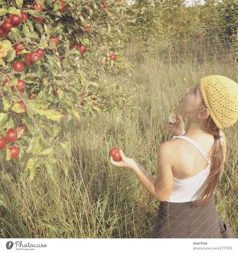 Apfelpflückerin feminin Kind Mädchen Kindheit Kopf Haare & Frisuren Gesicht Ohr Rücken Arme Hand 3-8 Jahre Umwelt Natur Sommer Schönes Wetter Baum Gras Feld