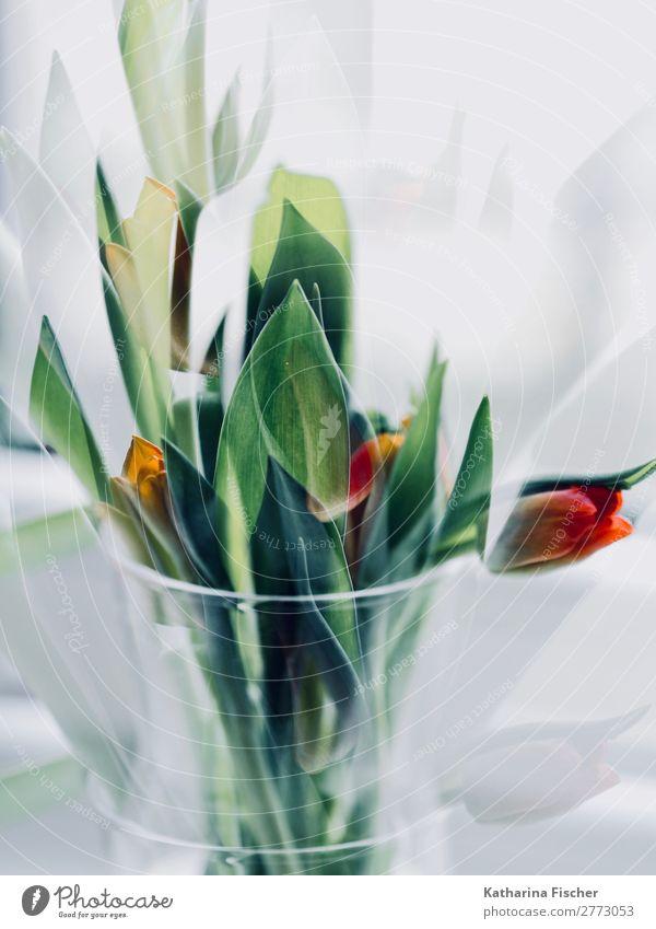Tulpen Blumenstrauß rot grün orange Kunst Kunstwerk Natur Pflanze Blatt Blüte Blühend leuchten schön gelb türkis weiß Vase Tulpenstrauß Doppelbelastung