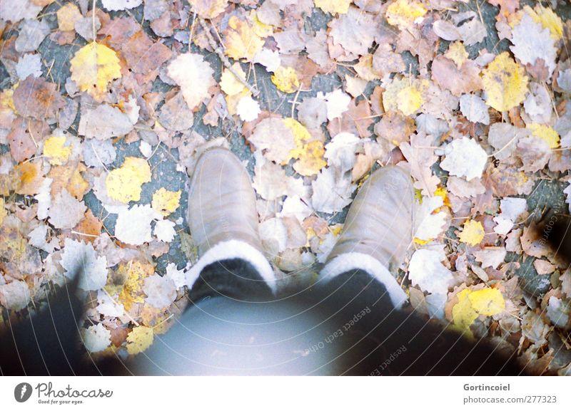 Geradeaus Mensch Frau Blatt Erwachsene feminin Herbst Fuß Schuhe herbstlich