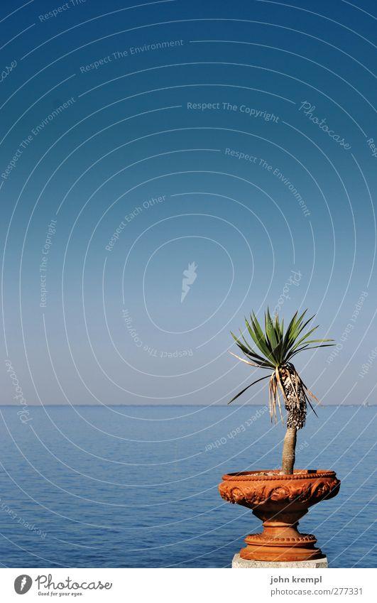 Nur noch vier Tage Umwelt Wasser Pflanze Palme Garten Park Küste Meer Schalen & Schüsseln Blumentopf stehen Wachstum ästhetisch Kitsch retro blau braun grün