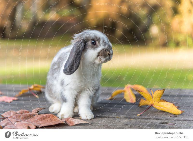 Kaninchen, Hase, Hase Hase & Kaninchen Nagetiere Gras Haustier Blatt Jugendliche Hintergrundbild weiß niedlich Frühling grün Pelzmantel Ohr schön Natur klein 1