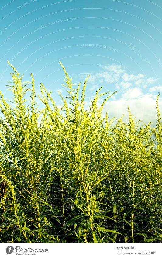 Busch Himmel Natur schön Sommer Pflanze Landschaft Umwelt Leben Blüte Garten Park Wetter Zufriedenheit Klima Häusliches Leben Sträucher