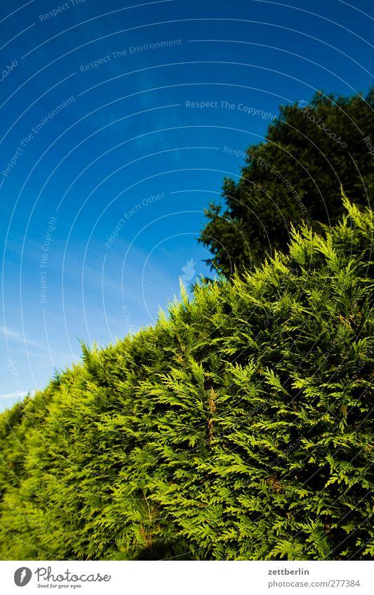 Hecke Himmel Natur Sommer Baum Garten Wetter Schönes Wetter Grenze Textfreiraum Baumkrone Wolkenloser Himmel Schrebergarten Nachbar Hecke Grundstück Konifere