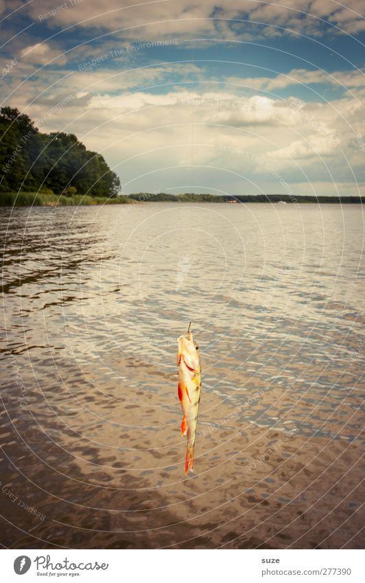 Da hängt ein Barsch Freizeit & Hobby Angeln Ferien & Urlaub & Reisen Umwelt Natur Luft Wasser Horizont Seeufer Tier Wildtier Fisch 1 hängen Angelköder Haken