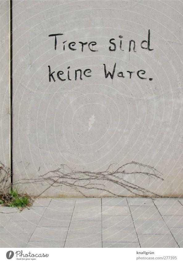 Tiere sind keine Ware. Pflanze Gras Wildpflanze Wilder Wein Ranke Stadt Mauer Wand Fassade Bodenplatten Beton Schriftzeichen Kommunizieren grau schwarz Gefühle