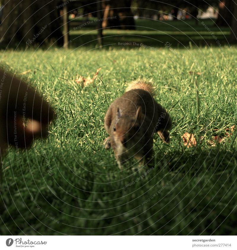 olympisch schnell! Hand Finger Sonnenlicht Sommer Gras Wildtier Eichhörnchen 1 Tier füttern laufen Neugier niedlich Geschwindigkeit braun grün Farbfoto