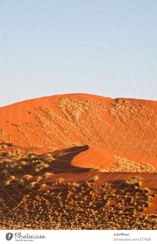 Puscheldüne Natur rot Landschaft Ferne Gras Sand hoch Schönes Wetter Wüste Stranddüne Wolkenloser Himmel Surrealismus Schattenspiel Namibia geschwungen