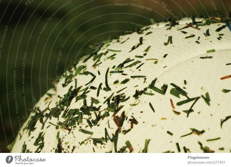 Schnittlauch Pflanze Gras Fußball Ball Bildausschnitt Anschnitt Leder