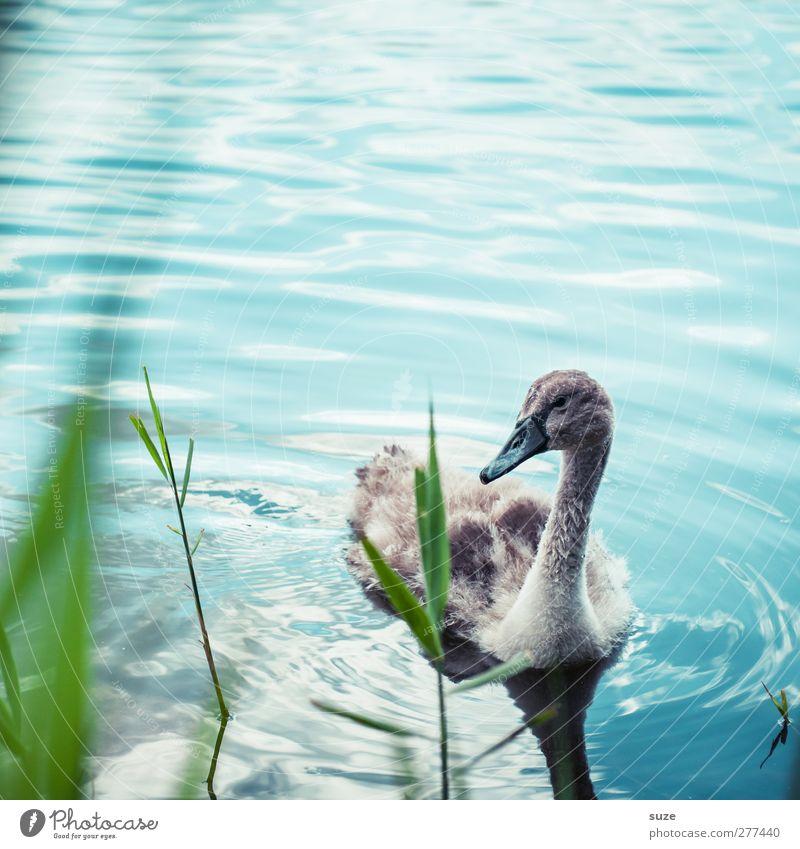 Schwanchen Umwelt Natur Tier Schönes Wetter Gras Seeufer Teich Wildtier Vogel 1 Tierjunges beobachten klein niedlich schön wild blau grün Neugier