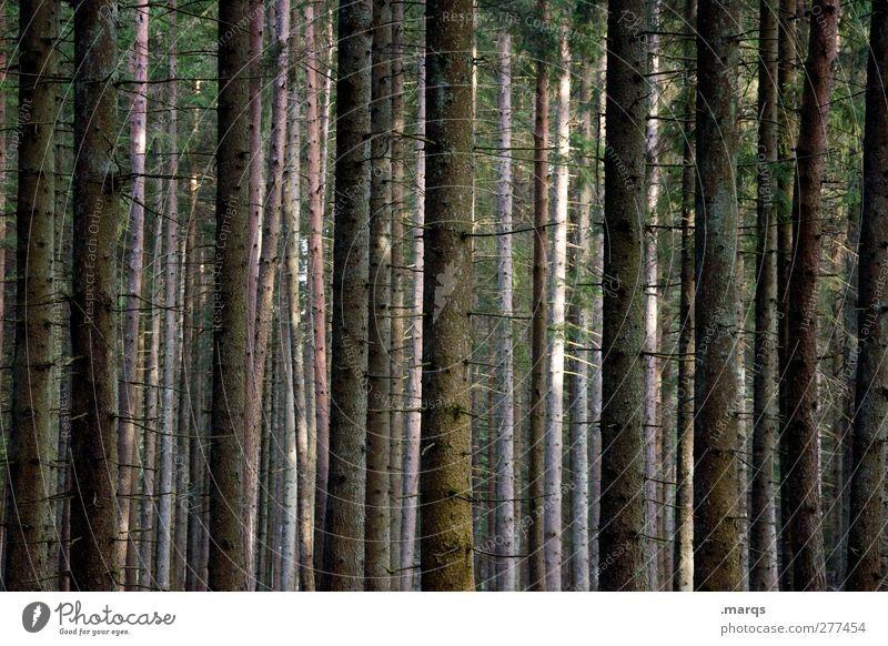 Wald Natur Sommer Baum Wald Umwelt dunkel Herbst Stimmung Klima wandern Ausflug Baumstamm Klimawandel Orientierung