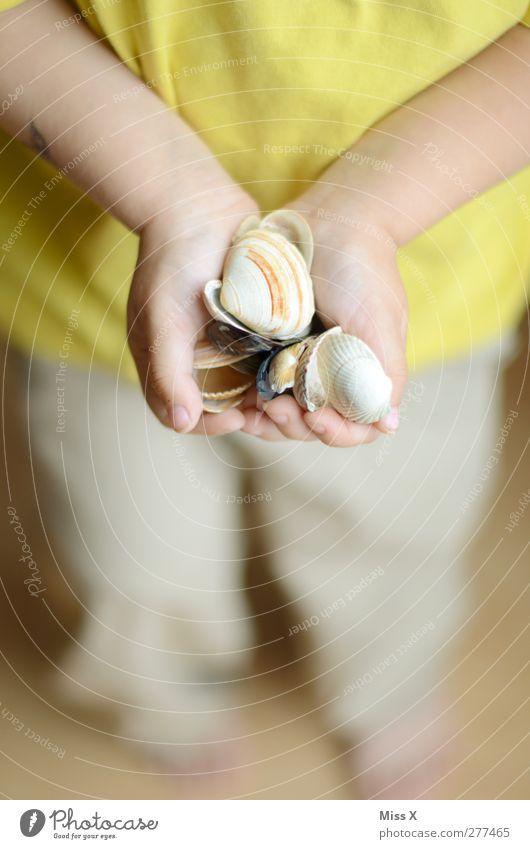 Strandsucher Mensch Kind Kleinkind Kindheit 1 1-3 Jahre 3-8 Jahre Küste Muschel Ferien & Urlaub & Reisen Muschelschale ansammeln Suche Hand Kinderhand Finger