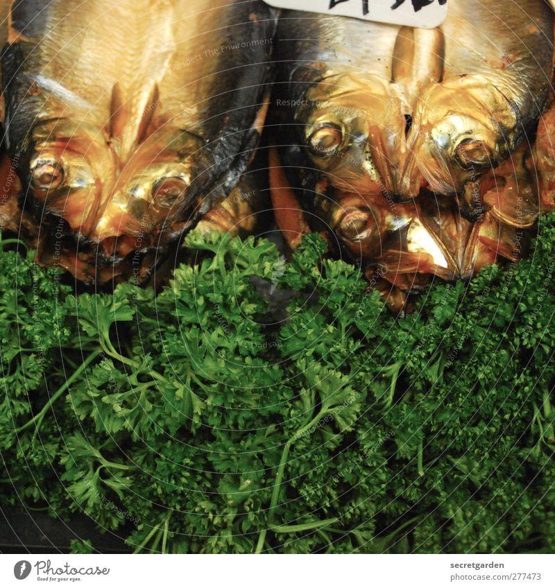 hier riecht es etwas fischig... Lebensmittel Fisch Ernährung Büffet Brunch Festessen Restaurant Pflanze Grünpflanze Tier Totes Tier Duft frisch braun grün