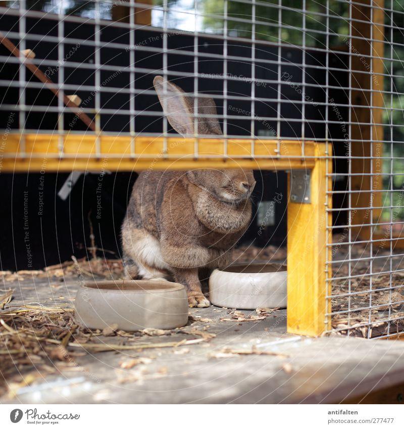The unknown rabbit Tier gelb natürlich lustig Holz Stein braun sitzen Nase Fell tierisch Stahl Haustier Tiergesicht Fressen Hase & Kaninchen