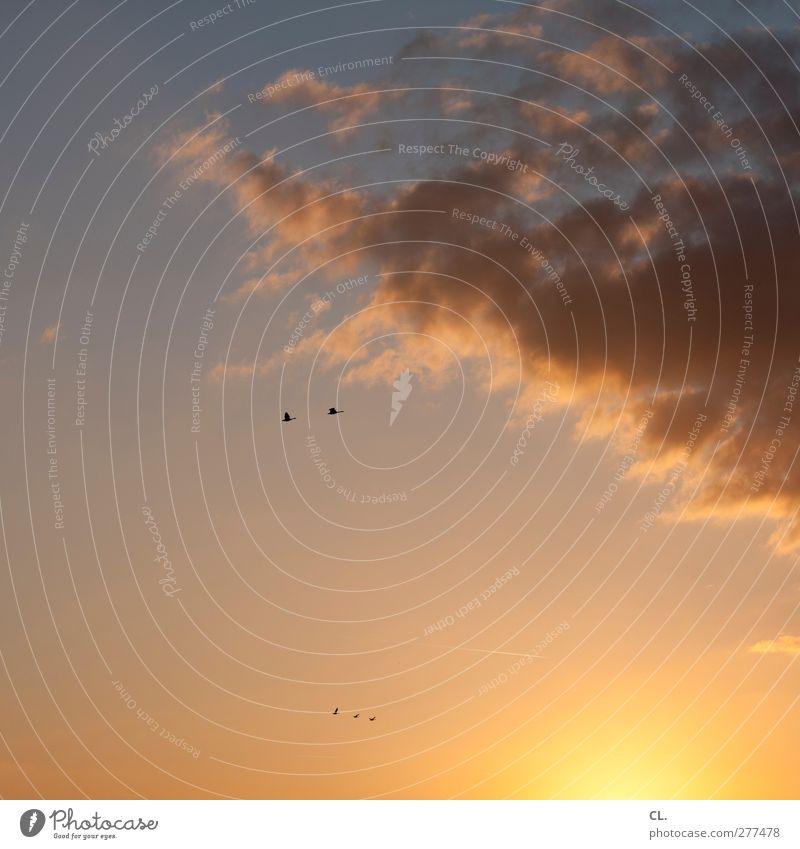 5 Umwelt Natur Himmel Wolken Frühling Sommer Schönes Wetter Tier Vogel Flügel Tiergruppe fliegen frei natürlich schön Wärme blau orange Glück Lebensfreude