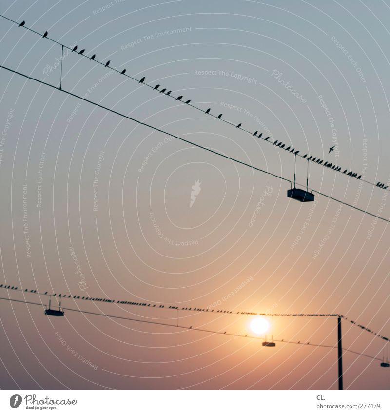 167 Umwelt Natur Himmel nur Himmel Wolkenloser Himmel Sonne Sonnenaufgang Sonnenuntergang Sommer Wetter Schönes Wetter Wärme Tier Vogel Tiergruppe Schwarm