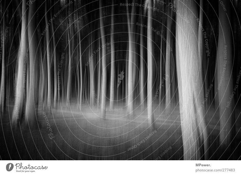 spooky trees Pflanze Baum Wald Urwald trashig verrückt schwarz träumen Angst Bewegung chaotisch Märchenwald Unschärfe Baumstamm Wege & Pfade Waldboden mystisch