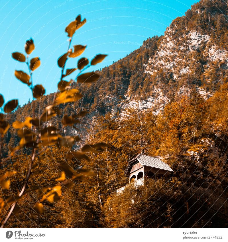 Hütte in den Bergen Natur Berge u. Gebirge Haus Holzhütte Aussichtspunkt wandern Landschaft Bäume Stimmung ausschnitt gutes Wetter Warmes Licht versteckt