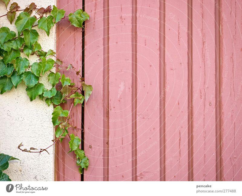 altrosa freiraum grün Pflanze Blatt Wand Mauer Holz Hintergrundbild rosa Fassade Idylle Textfreiraum Idee violett Gelassenheit Nostalgie kuschlig