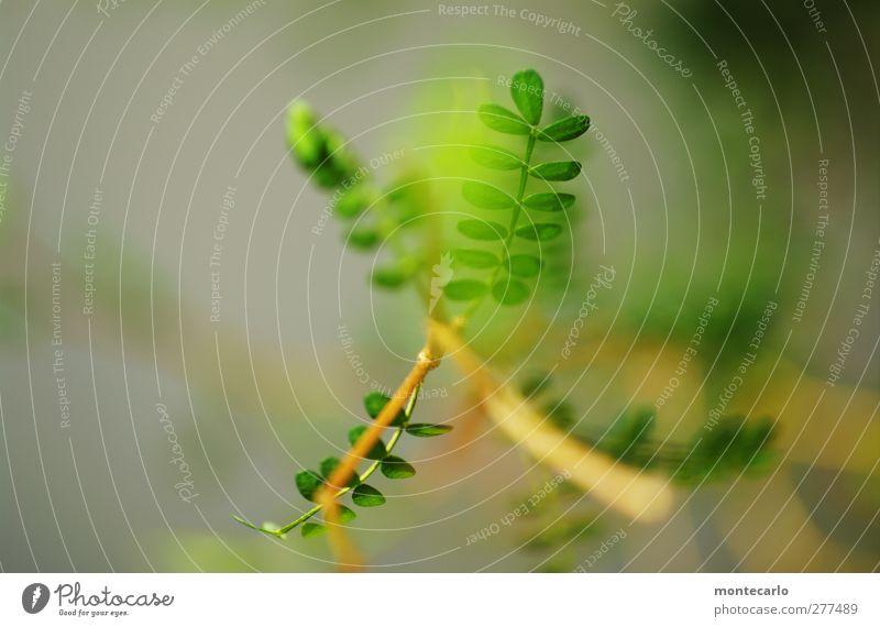 New Sophy Natur Pflanze grün Blatt Umwelt natürlich klein frisch elegant authentisch Sträucher ästhetisch einfach dünn Grünpflanze Wildpflanze