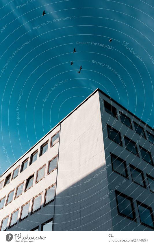 6 Vögel, 1 Gebäude Himmel blau Stadt Tier Fenster Architektur Wand Bewegung Mauer Freiheit Vogel Fassade grau fliegen frei