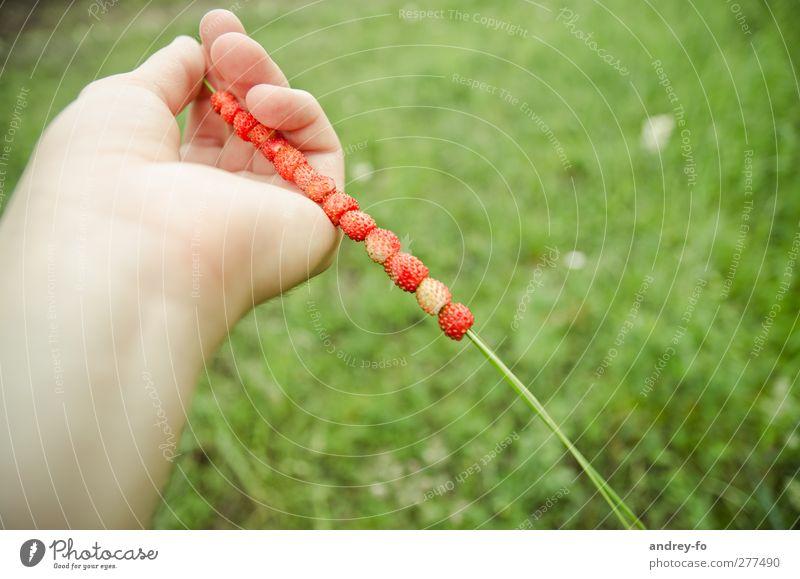 Sommerfrüchte :) Frucht Ernährung Picknick Bioprodukte Vegetarische Ernährung Diät schön Gesundheit Leben Hand Finger Natur Beeren Erdbeeren genießen grün rot
