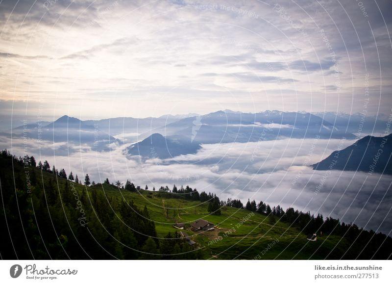heidi für einen tag. Ferien & Urlaub & Reisen Baum Wolken ruhig Wald Erholung Landschaft Ferne Berge u. Gebirge Freiheit Nebel Schönes Wetter Alpen Gipfel