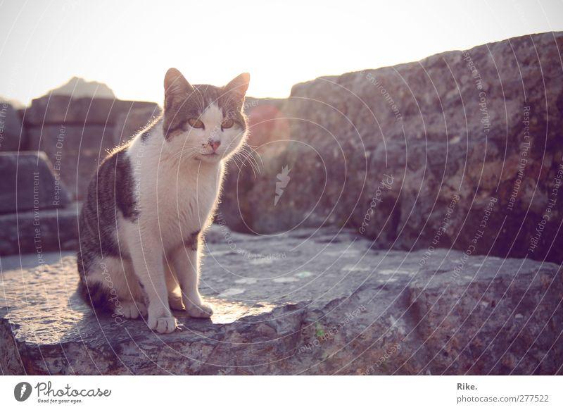 Ein Moment. Umwelt Sonne Sommer Mauer Wand Fassade Tier Haustier Katze 1 Stein beobachten Erholung sitzen bedrohlich frei schön listig niedlich Wachsamkeit