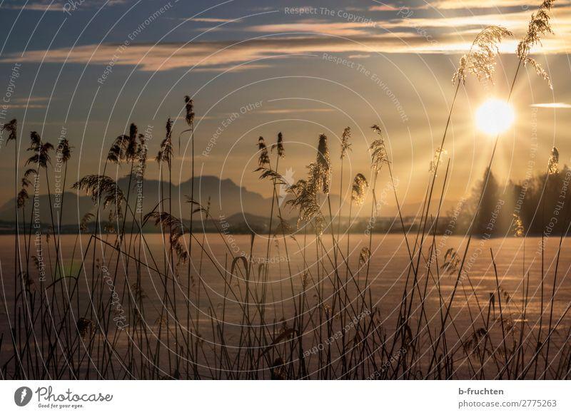 Schilf am gefrorenen See, Sonnenuntergang Wohlgefühl Erholung ruhig Meditation Ferien & Urlaub & Reisen Winter Natur Himmel Sonnenaufgang Sonnenlicht Eis Frost