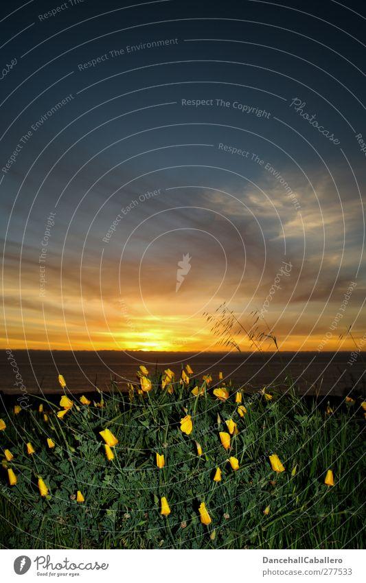 auch Blumen gehen schlafen Natur Pflanze Himmel Wolken Nachthimmel Sonne Sonnenaufgang Sonnenuntergang Schönes Wetter Wiese Küste Meer außergewöhnlich Kitsch